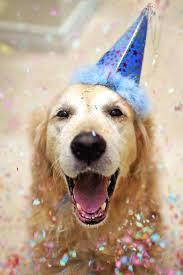 best 25 happy dogs ideas on instagram andrex