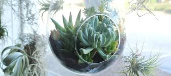 Low Light Succulents by The Best Houseplants And Planters For Tiny Apartments
