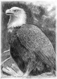 canadian dragon fantasy art original bald eagle pencil drawing