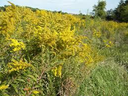 native nebraska plants a september walk through our tallgrass prairie the cayenne room