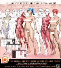 Female Anatomy Video 113 Best Body Images On Pinterest Art Tutorials Sketches And