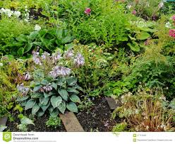 Summer Garden Plants - beautiful decorative flowers in the summer garden the plant is a