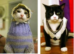 sweaters for cats 8 stupid cat gifts i cat