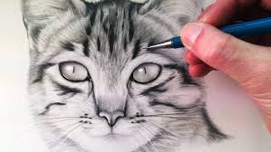 realistic cat drawing drawing a realistic baby kitten cute cat