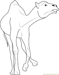 crazy camel coloring page free camel coloring pages