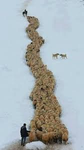 imagenes lindas naturaleza pin de patricia cardonell en borregos cabras de monte carneros