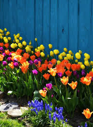 spring landscaping colorful spring landscaping with tulips stock photo image of