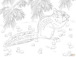 townsend u0027s chipmunk coloring page free printable coloring pages