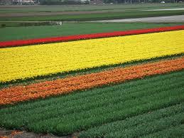 flower garden in amsterdam photo essay keukenhof the world u0027s largest flower garden