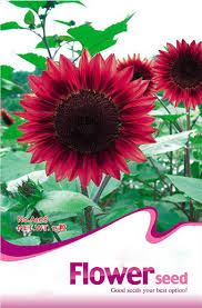 china gmo seeds china gmo seeds manufacturers and suppliers on