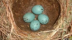 ground egg shells nature eggshells act like sunblock study suggests