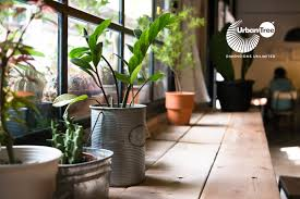 Plants Home Decor Stylish Ways To Use Indoor Plants In Your Home Décor