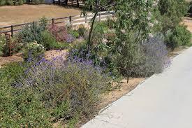 california native plant society blog camissonia u0027s corner 2014 native plant garden retrospective