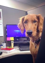 10 Tips For Taking Your by 10 Tips For Taking Your Dog To Work