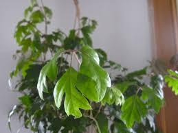 Best Indoor Plants Low Light by Houseplants Wendy World