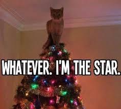 Funny Christmas Cat Memes - 34 best christmas meme s images on pinterest christmas humor