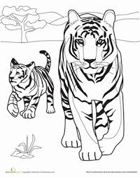 coloring page tigers tiger family worksheet education com