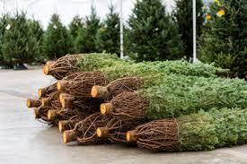 start a side business selling trees sidehustle hq