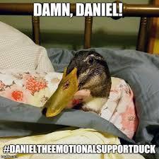 Duck Meme - daniel the duck memes imgflip