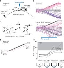 neural coding in barrel cortex during whisker guided locomotion
