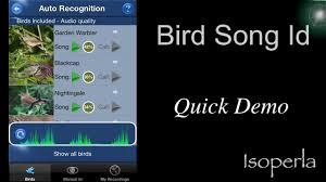 bird song id demonstration youtube