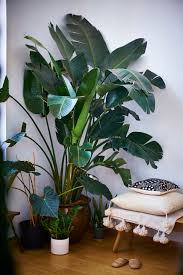 the best meditation chairs for a silent mind plants indoor and palm
