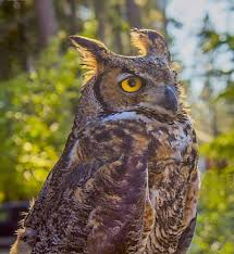 birds unlimited hosts owl be home for benefit