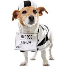 dog candy corn witch costume bootique prisoner dog costume petco