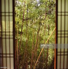 sliding doors of traditional japanese house opening to bamboo
