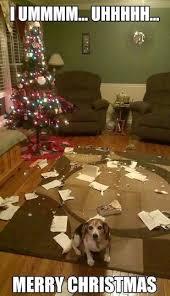 Funny Memes About Christmas - animal memes merry christmas funny memes