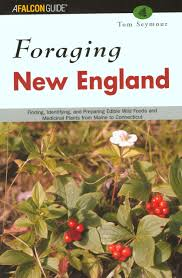 native edible plants foraging new england finding identifying and preparing edible
