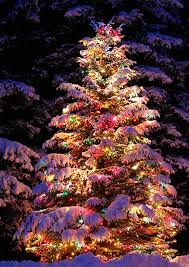 outdoor lighted tree doliquid decorations