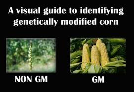 Organic Food Meme - 10 best gmo memes the method medium