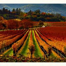 514 best cas wine country images on wine tasting