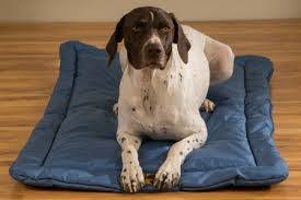 the best indestructible chew proof dog beds tough doggy beds