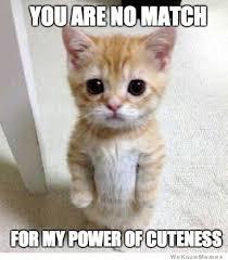Meme Kitty - kitten meme weknowmemes