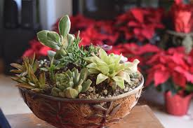 plants to grow indoors the easiest plants to grow indoors clicks and mortar