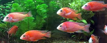 florida tropical fish farms association
