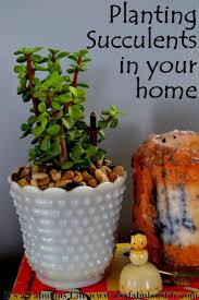 225 best succulents images on pinterest gardening plants and