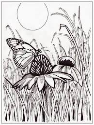 animal butterfly colouring book butterfly colouring games cool