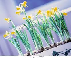 Easter Decorations For Shop Windows by Easter Window Stock Photos U0026 Easter Window Stock Images Alamy