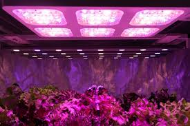 best grow lights on the market led grow lights review how to choose