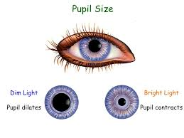 Function Of The Blind Spot In The Eye 17 Blind Spot Eye Function The Past Present And Future Of