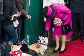 Queen Corgis Queen Most Amused At Meeting Corgis In Dorset Mirror Online