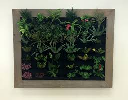 wall mounted planters plants