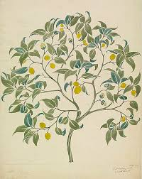 voysey the ornamental tree late 19th early 20th century frank s