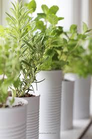 Window Sill Herb Garden Designs Window Sill Herb Garden U2014 Kendra Castillo