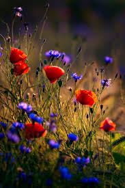 Images Flowers 278 Best Beautiful Nature Flowers Images On Pinterest Beautiful