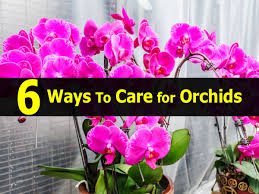 Orchids Care 6 Ways To Care For Orchids