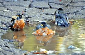 your guide to attracting birds this summer 1 celebrate urban birds